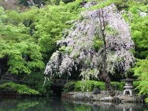 tree-on-water