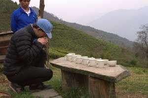 quality tea trip